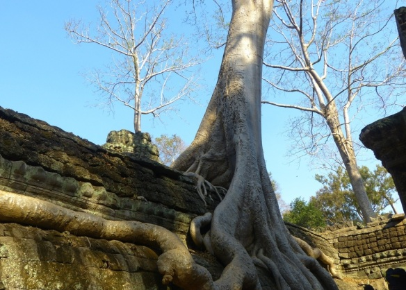 Tree roots wrapped around the temple stone