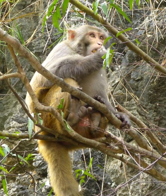 Or monkeys...