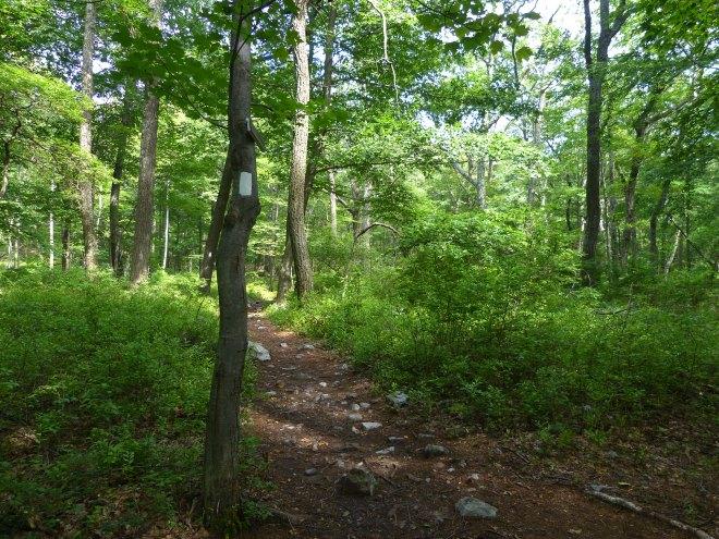 Appalachian Trail Marker